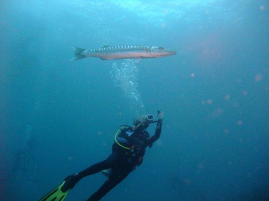Asia Divers Resort: Local sealife