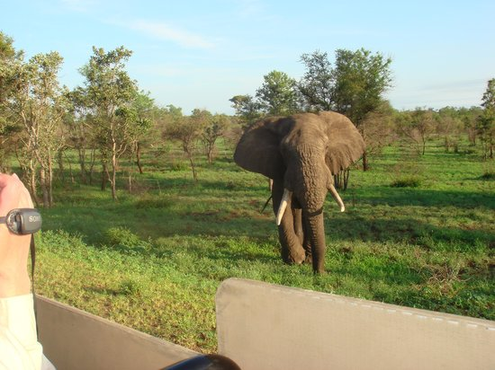 Singita Lebombo Lodge: He has a question?