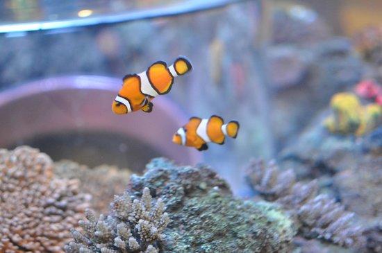 SEA LIFE Porto : Nemo!