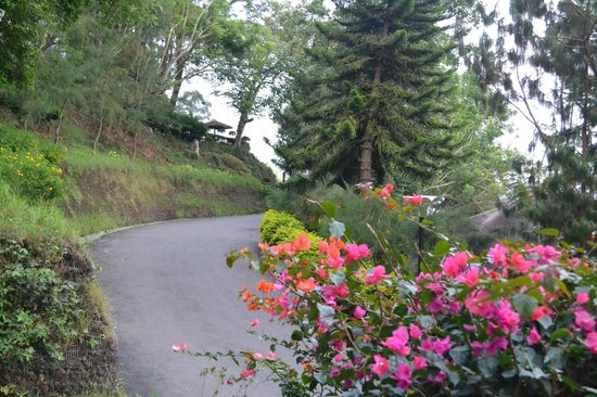 Munnar - Terrace Greens, A Sterling Holidays Resort: view around