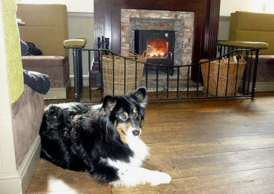 The Lodge Inn: Millie enjoying the Fire.
