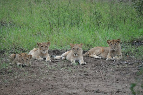 Garonga Safari Camp: Roaarrrrr!