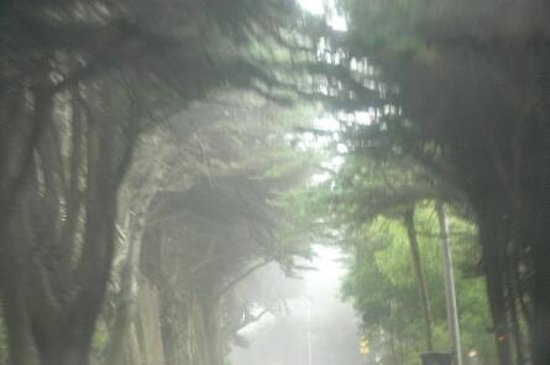 Howard Creek Ranch: misty tree tunnel heading to HCR