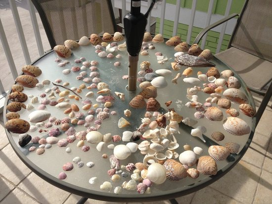 Beachview Cottages: Lots of shells from the beach
