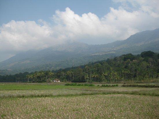 River Rock HomeStay : Photo stop on the way to Kolukkumalai tea plantation