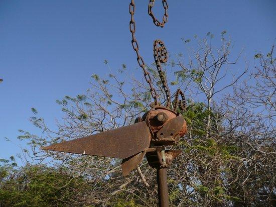 Kibbutz Lotan: Bird art