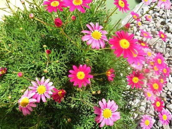 Hotel Pension d'Avignon: hübsche Blumen