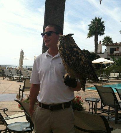 The Ritz-Carlton Bacara, Santa Barbara: Visit from local zoo down at the pool!