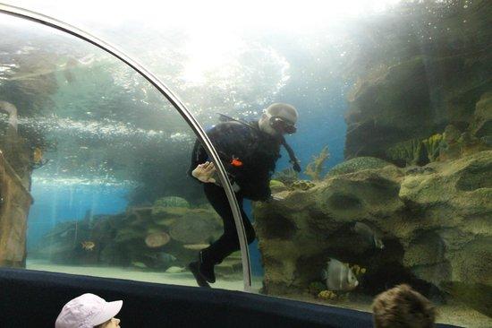 Greater Cleveland Aquarium Cleveland Zdj Cie Diver
