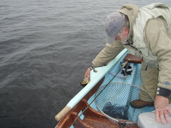 Grasshopper Cottage: Lough Corrib brown trout caught and released