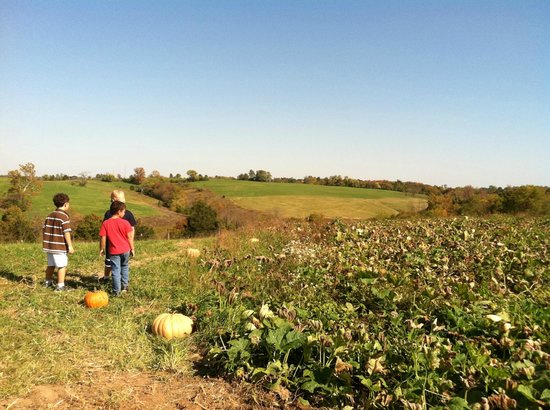 Richmond, KY: Pumpkin patch
