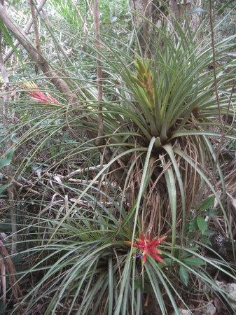 Leon Levy Native Plant Preserve: Flora II