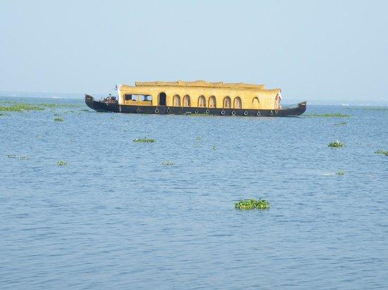 Purity at Lake Vembanad: Houseboats