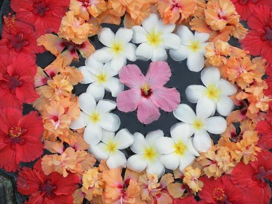 Purity at Lake Vembanad: Bloemenpracht, dagelijks in de tuin Varphu