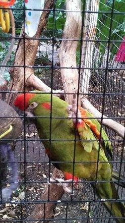 Miller Park Zoo: Pretty Bird!