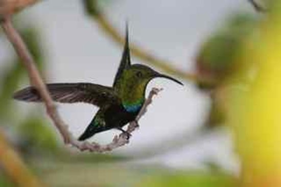 Miller Manor Guest House: Guests love to watch our resident hummingbirds on our gallery, and in our avocado tree