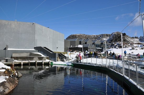 Alesund, Norvège : The pool with pinguins