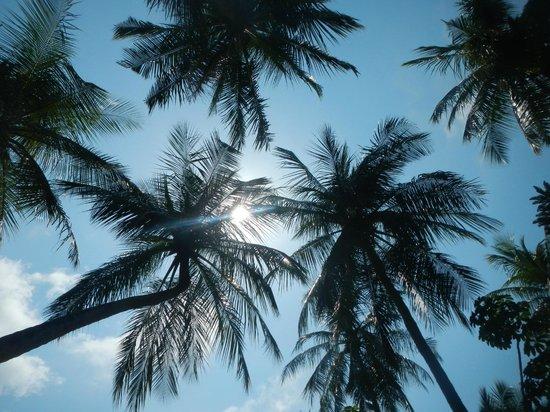 Paradise Island Resort & Spa: open area sky view