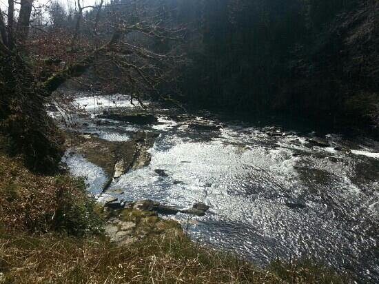 Falls of Clyde: Beautiful scenery and splendid views of the River Clyde at its best.