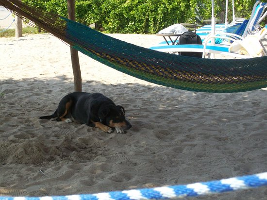 Hotel La Quinta del Sol: Sasha, relaxin' at the beach club
