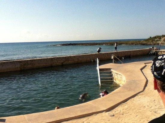 Dolphin Discovery Costa Maya: Awsome