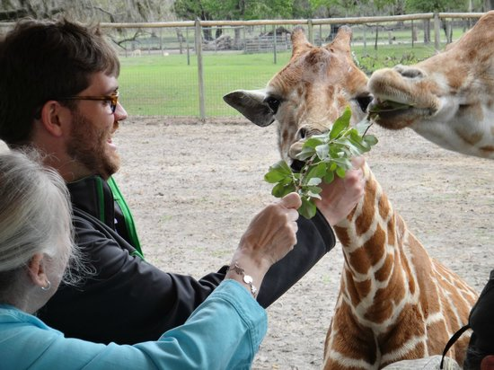 Giraffe Ranch: Joy