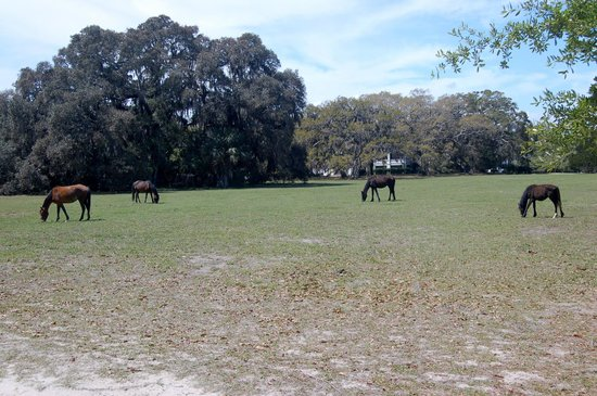 Greyfield Inn: Wild Horses, Greyfield grounds