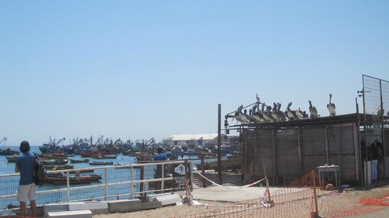 Pelicans overlooking the Arica Fish Market