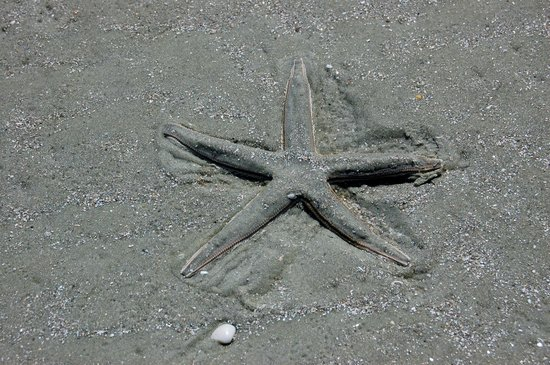 ‪‪Cumberland Island‬, جورجيا: Starfish, Cumberland National Seashore‬