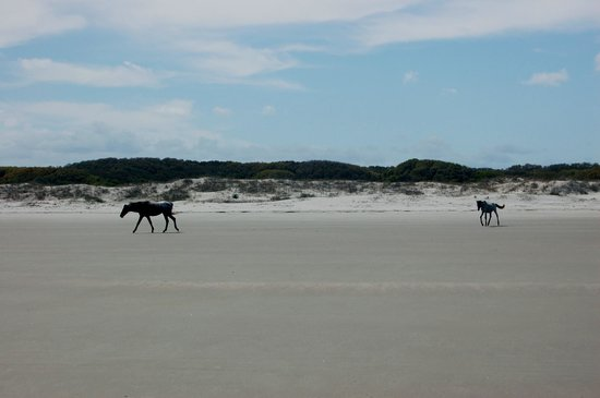 Cumberland Island, Georgien: Wild Horse on the Beach, Cumberland National Seashore
