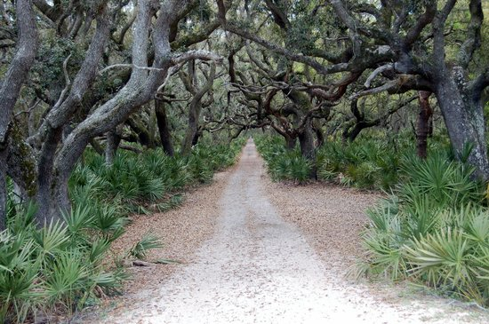 Cumberland Island, GA: Path to the beach, Cumberland
