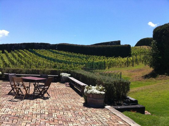 Mudbrick Vineyard & Restaurant : Vines from the terrace