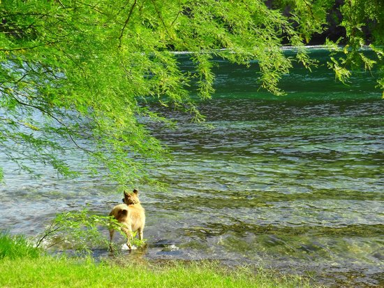Buckskin Mountain State Park: Dogs are allowed in the water near the boat ramp