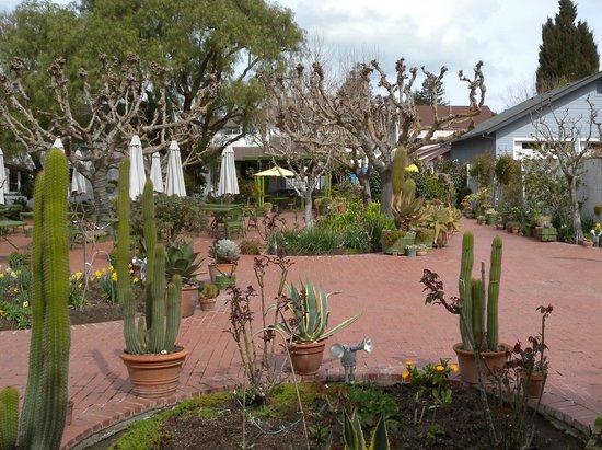 Jardines de san juan picture of jardines de san juan for Los jardines de sansuena