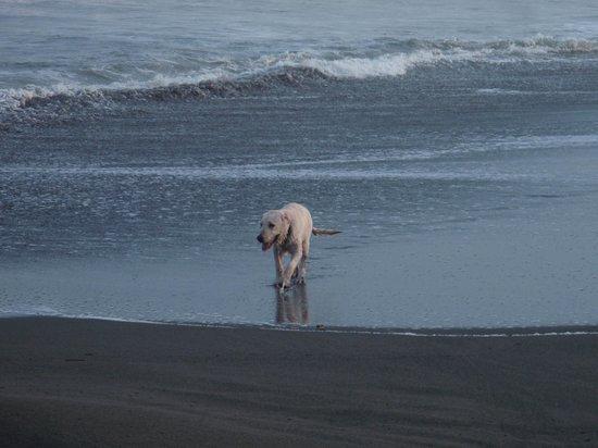 Tsunami Inn: Beautiful beach