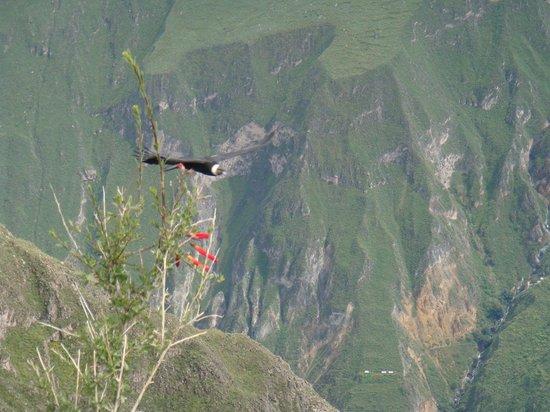 Peru Dream Travel - Day Tours: CRUZ DEL CONDOR COLCA