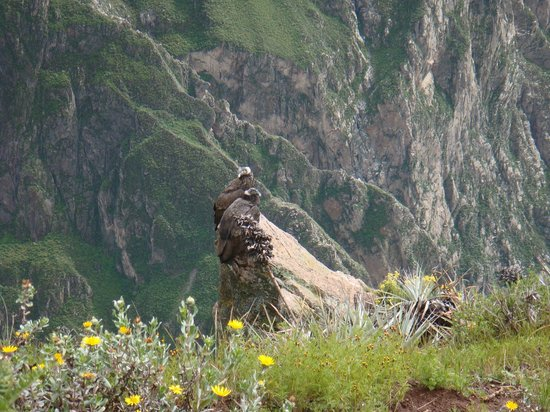 Peru Dream Travel - Day Tours