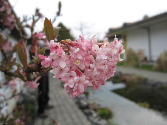 Sunny Days Bed & Breakfast : 花が咲き出しております。