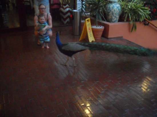 Royal Decameron Golf, Beach Resort & Villas: a peacock roams the grounds - he came to the bar area one evening - totally tame.
