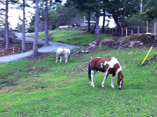 Prancing Horse Retreat: Seven and Palo Grazing