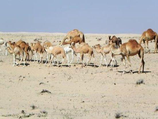 Bab Al Shams Desert Resort & Spa: Deserto