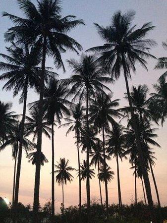 Phi Phi Island Village Beach Resort : palm trees