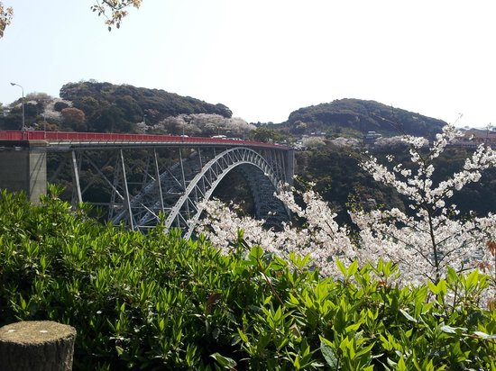 Nagasaki Prefectural Saikai Bridge Park : 桜は満開過ぎ