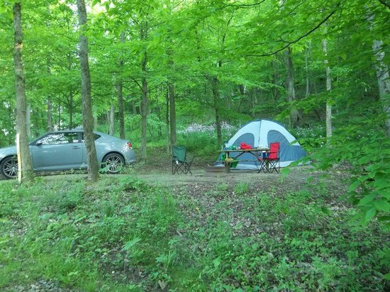 Mohican Adventures Campground & Cabins: Wooded Campsite