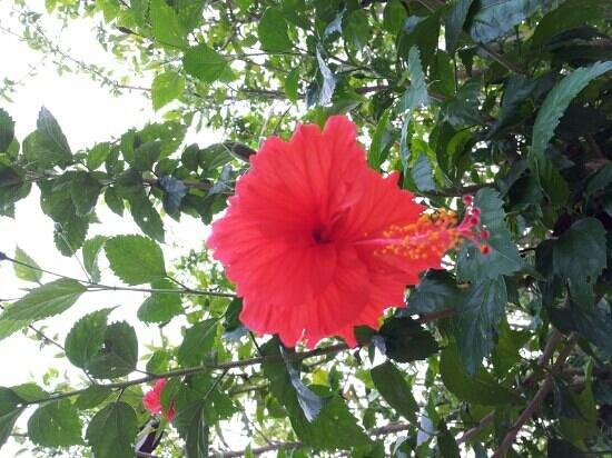 Thousand Flower Garden (Taman Seribu Bunga): Malaysia Bunya Raya