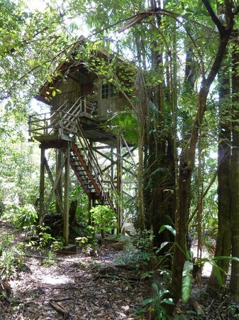 Permai Rainforest Resort: High up in a tree