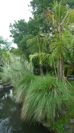 Baliwood Resort : Les jardins
