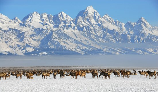Bentwood Inn Jackson Hole : Bentwood Inn_National Elk Refuge in Winter