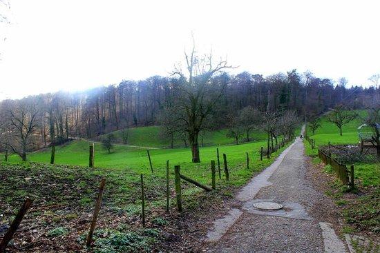 Bierhelderhof: Trails leading to restaurant