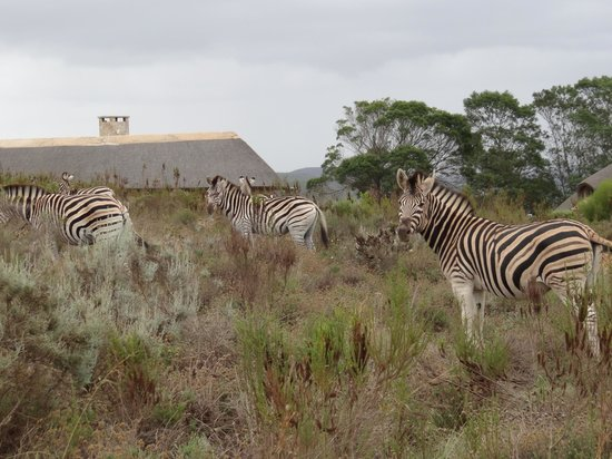 Gondwana Game Reserve: Wildlife